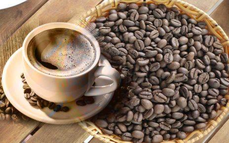 Robusta Kahve Nedir, Robusta Kahve Nerede Yetişir? Robusta Coffee Ne Demek? Robusta Kahvesi Fiyat, Robusta Nedir