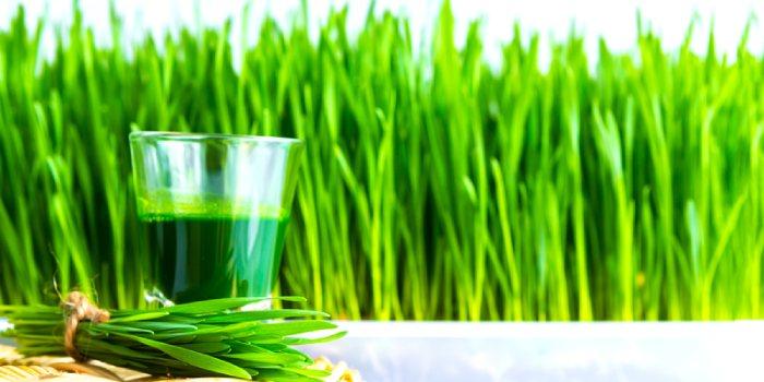 buğday çimi faydaları
